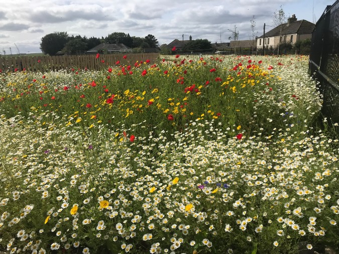 John Chambers Wildflower Seed Supplied for Innovative New Scottish Wick Campus