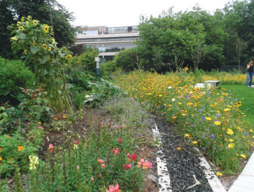 Leeds University roof garden in full bloom