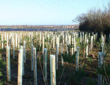 Green-tech supply rural tree planting products for largest Solar Park in Kent