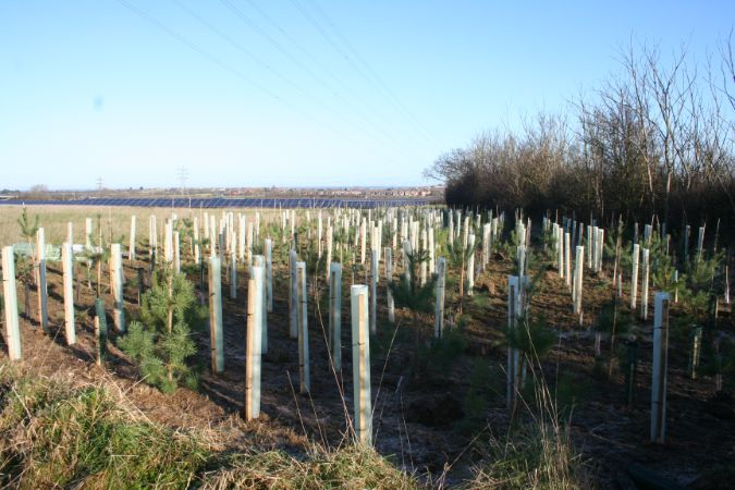 Green-tech supports National Tree Week
