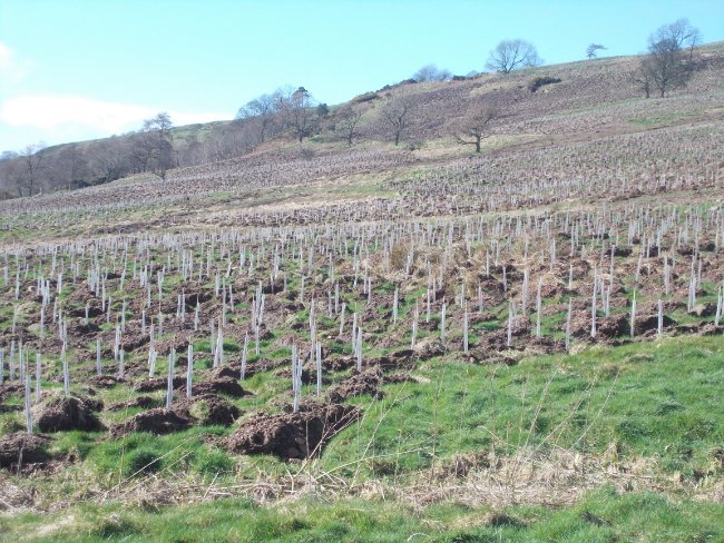 Green-tech supply tree shelters for 279ha woodland creation in the Kilpatrick Hills