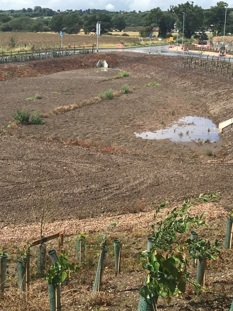 Green-tech Soil Brand Green-tree launches bespoke soil for Rain Gardens