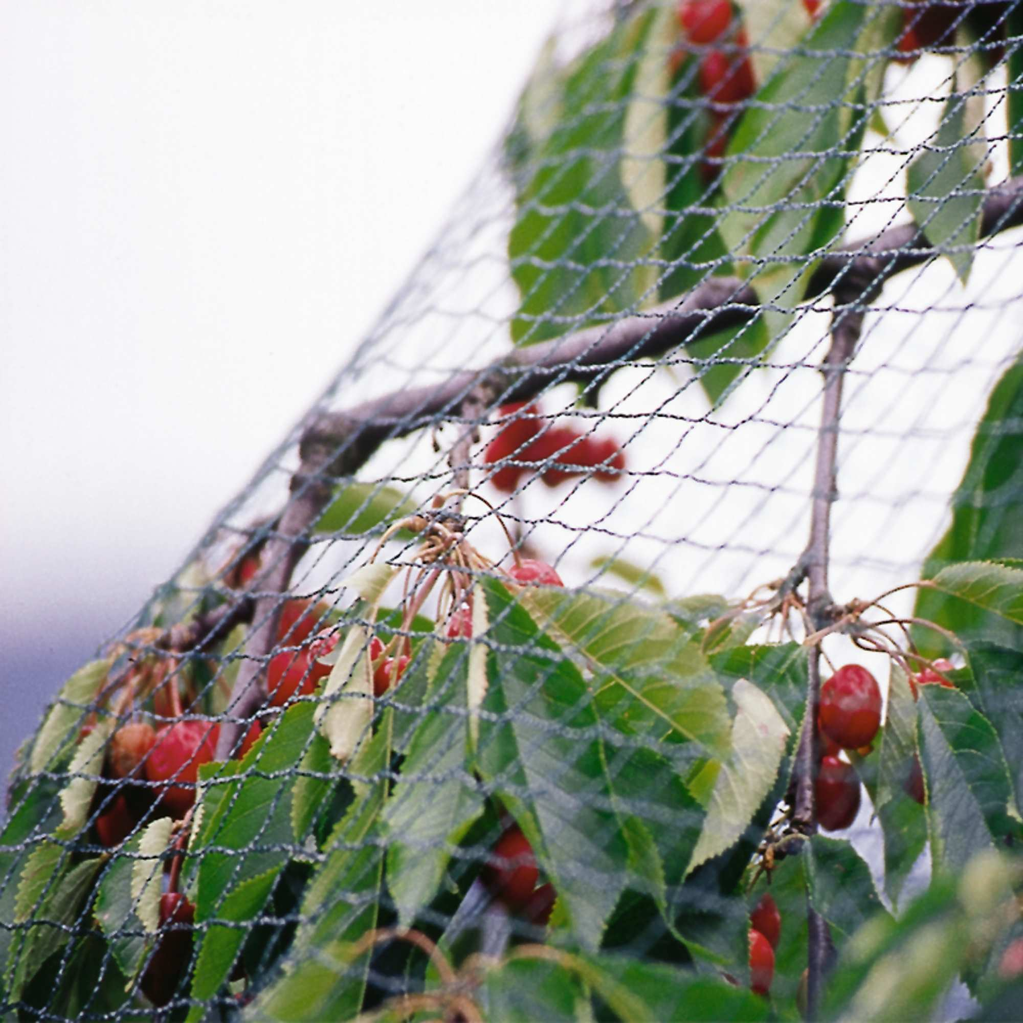 Economy Anti Bird Netting - Anti-Bird Netting | Green-tech