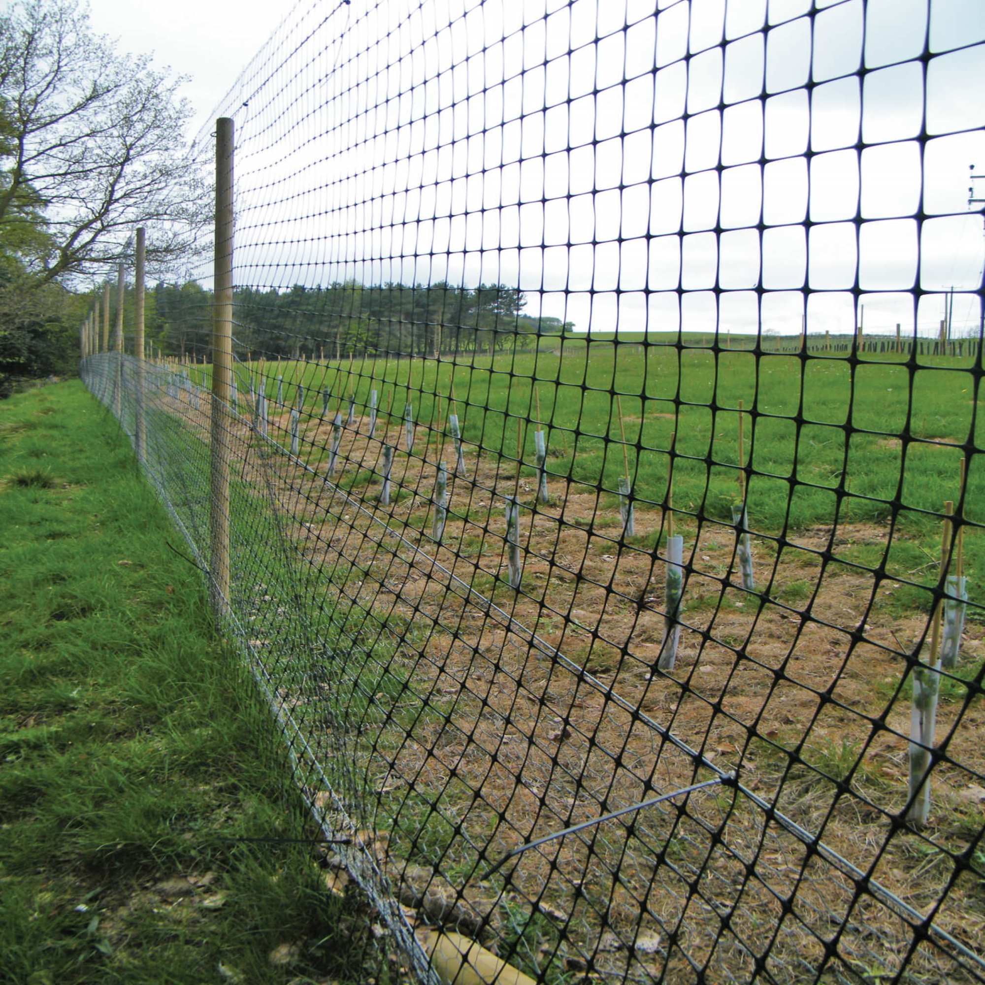 Fencing & Windbreaks