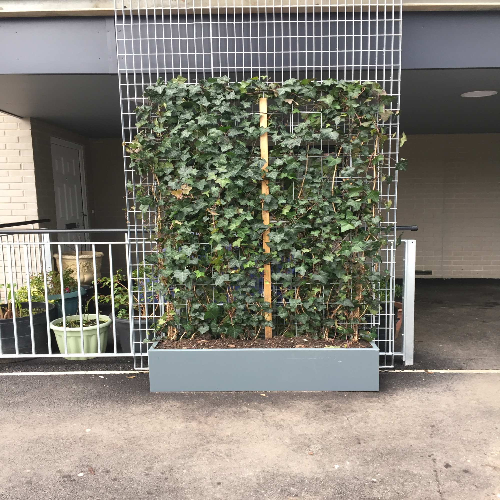 Living ivy green screen fence package green walls ivy for Living screen fence