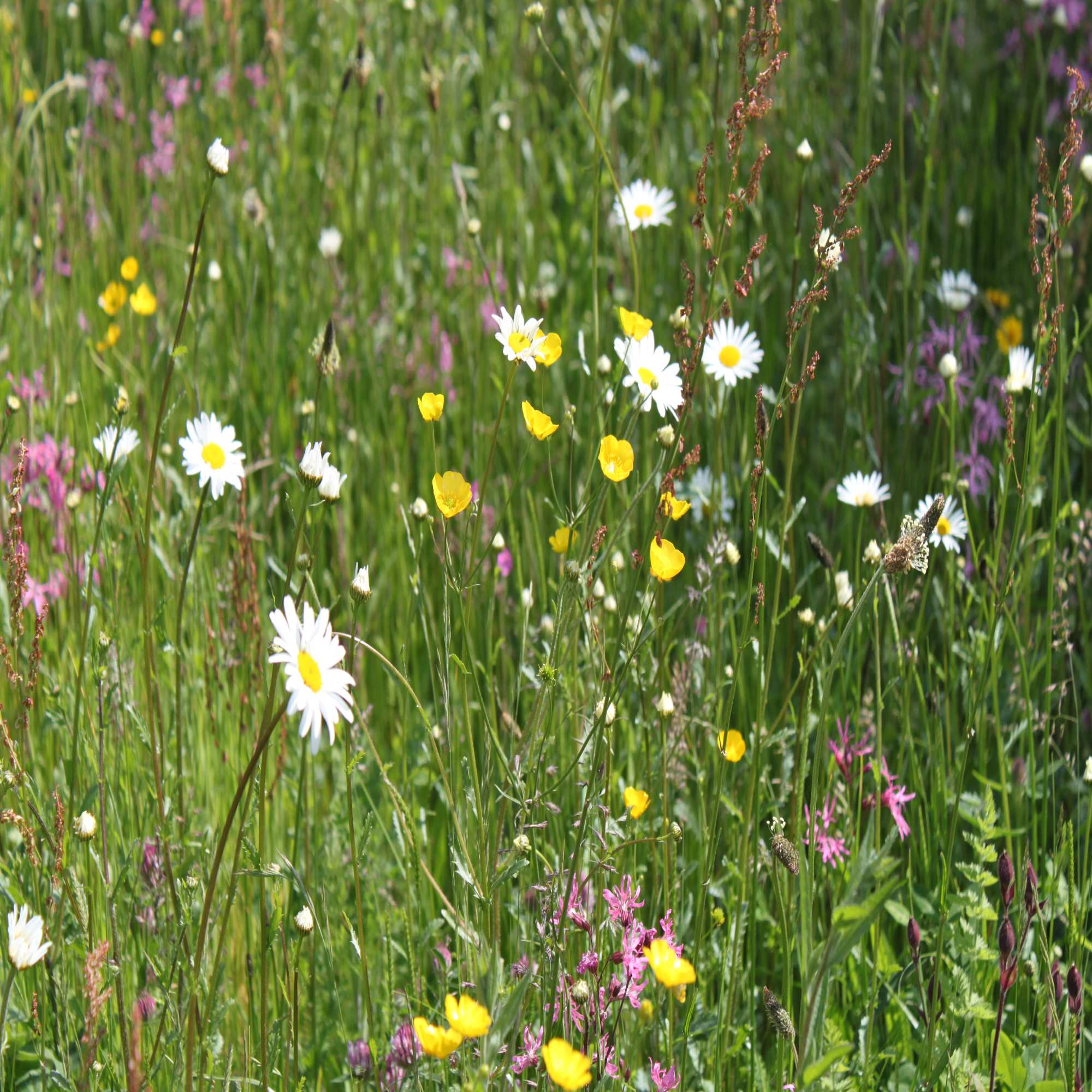 Wildflower Seed Packets & Gifts