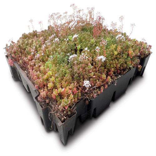 Sedum Green Roof Trays