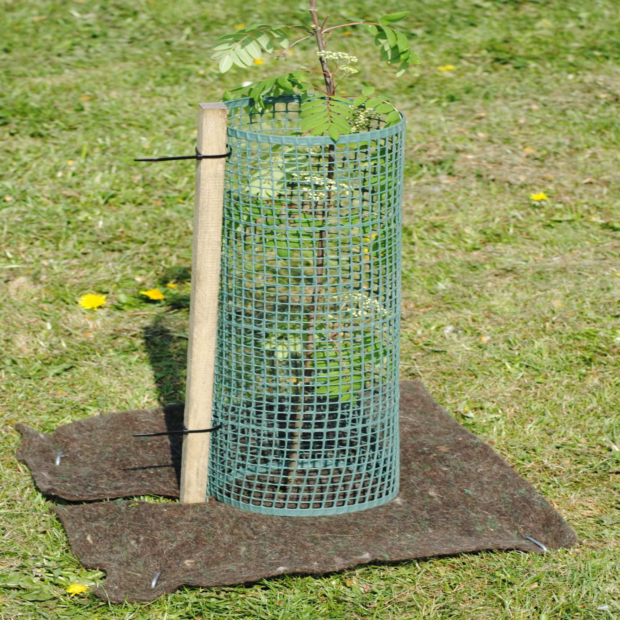 mesh tree guard shelters and stake packages