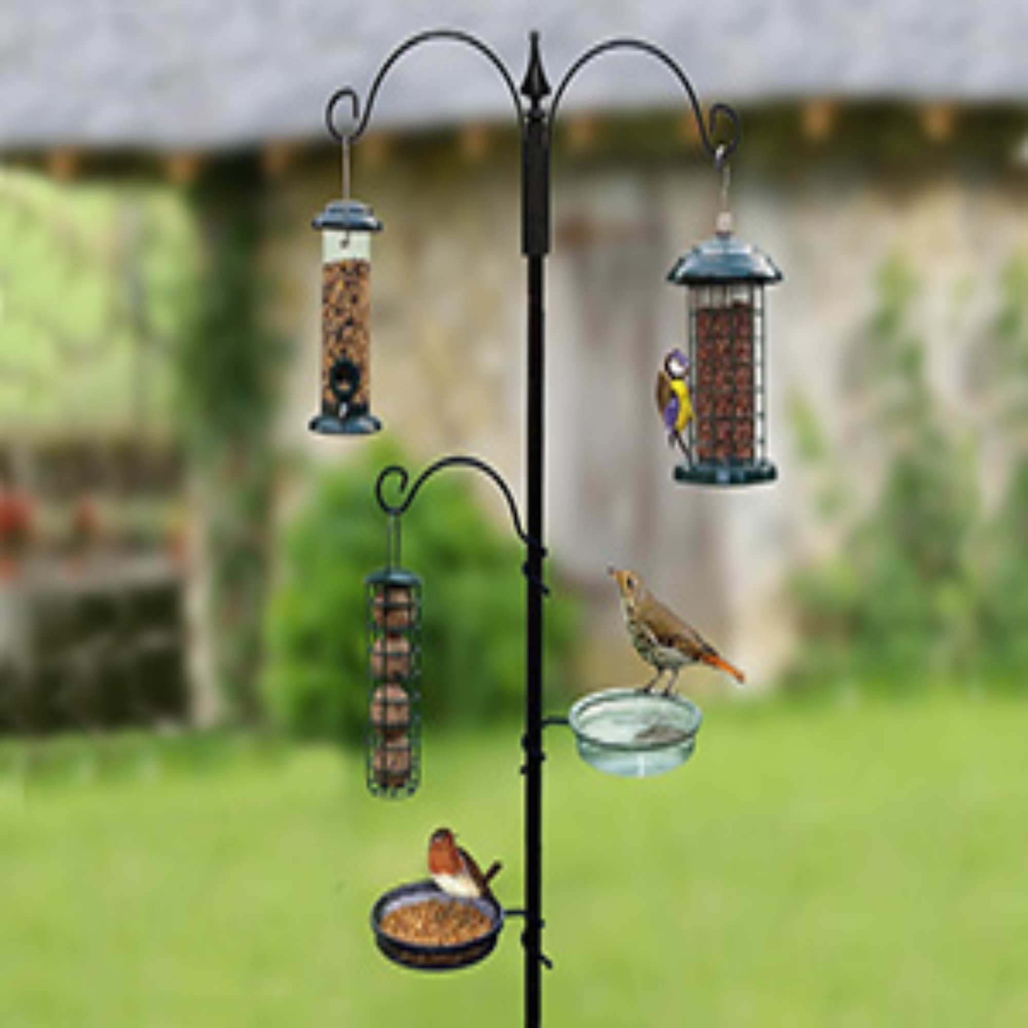 Bird Feeders & Seed